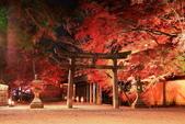 秋之戀(14) 京都秋夜:1162.jpg 京都大覚寺