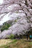 春(6) 春的禮讚:0679.JPG 滋賀.海津大崎