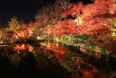 秋之戀(14) 京都秋夜:1291.jpg 京都永観堂