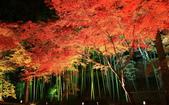 旅 遊 精 選:0695.jpg ( 2013 . 11 . 29 ) 京都北野天滿宮
