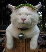 貓咪的五四三 ... 喵 ... :0011.jpg