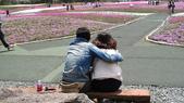 北國之春(1) 戀人協奏曲:0605.jpg 富士芝桜まつり