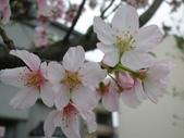 20130522日本合掌村:IMGP3209.JPG