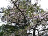 2011阿里山櫻花季二日遊(4/2~4/3):阿里山賓館吉野櫻