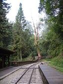 2008奮起湖阿里山之旅(8/30~8/31):阿里山森林鐵路神木車站