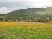 2007阿里山墾丁之旅(1/29~2/1):滿州花海