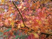 2011武陵福壽山賞楓二日遊12/4~12/5:福壽山農場楓紅