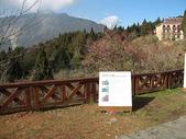 2007阿里山墾丁之旅(1/29~2/1):阿里山沼平公園