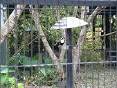 2010初秋花東之旅(9/24~9/26):新光兆豐休閒農場鳥園