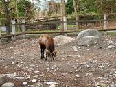 2010初秋花東之旅(9/24~9/26):新光兆豐休閒農場可愛動物區