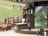 :清境農場青青草原綿羊秀