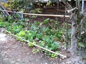 邁向101司馬庫斯跨年之旅(12/31~1/1):司馬庫斯巨木群登山步道