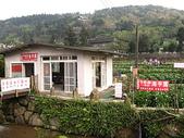 2010陽明山花季暨台北燈節(3/6):竹子湖海芋田