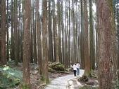 2007阿里山墾丁之旅(1/29~2/1):阿里山巨木群
