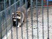 2010初秋花東之旅(9/24~9/26):新光兆豐休閒農場浣熊