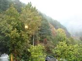 2011武陵福壽山賞楓二日遊12/4~12/5:清晨下雨中的武陵富野渡假村山景