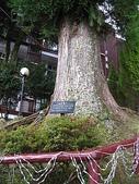 2008奮起湖阿里山之旅(8/30~8/31):阿里山賓館