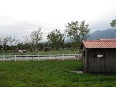 2010初秋花東之旅(9/24~9/26):新光兆豐休閒農場乳牛區