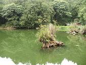 2008奮起湖阿里山之旅(8/30~8/31):阿里山姊妹潭