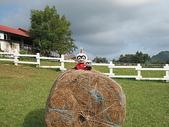 2007四天三夜環島旅行(7/31~8/3):大寶小寶於台東初鹿牧場