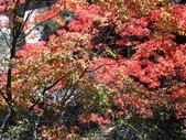 2011武陵福壽山賞楓二日遊12/4~12/5:武陵農場迎賓橋楓紅