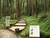 2008奮起湖阿里山之旅(8/30~8/31):阿里山環潭木棧道