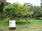 2008奮起湖阿里山之旅(8/30~8/31):阿里山木蘭園