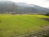 2010七天六夜環島旅行(1/22~1/28):花東線鐵路沿線油菜花海