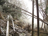 :太平山茂興國家步道的覆雪草木
