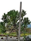 2010初秋花東之旅(9/24~9/26):新光兆豐休閒農場植栽區