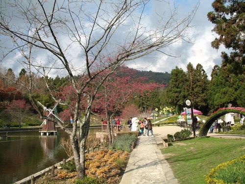 2012清境合歡山三天兩夜旅行1/19~1/21:清境小瑞士花園