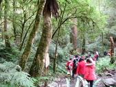 邁向101司馬庫斯跨年之旅(12/31~1/1):司馬庫斯巨木群登山步道巨木