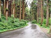 :溪頭森林遊樂區