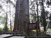 2007阿里山墾丁之旅(1/29~2/1):阿里山香林神木