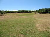 2008暑假墾丁之旅(8/24~8/26):鵝鑾鼻公園的大草原