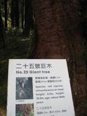2011阿里山櫻花季二日遊(4/2~4/3):阿里山巨木群