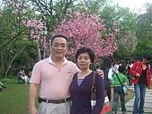 2010陽明山花季:2010陽明山花季07.JPG