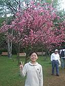 2010陽明山花季:2010陽明山花季09.jpg
