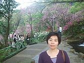 2010陽明山花季:2010陽明山花季12.JPG