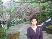 2010陽明山花季:2010陽明山花季13.JPG