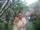 2010陽明山花季:2010陽明山花季14.JPG