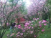 2010陽明山花季:2010陽明山花季16.JPG