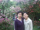 2010陽明山花季:2010陽明山花季17.JPG