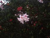 2010陽明山花季:2010陽明山花季18.JPG