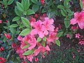 2010陽明山花季:2010陽明山花季19.JPG