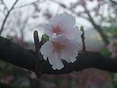 2010陽明山花季:2010陽明山花季20.JPG