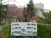 2010八里櫻花季:2010櫻花16.JPG