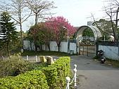 2010八里櫻花季:2010櫻花19.JPG