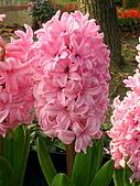 99.01.04 台北花卉展:DSCN0337.jpg