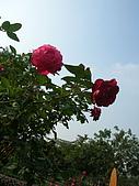 99.01.04 台北花卉展:DSCN0279.jpg